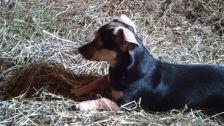 Anya in the hay